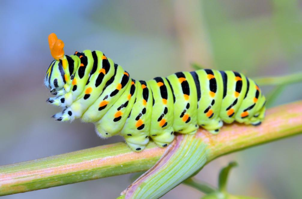a-close-up-of-the-caterpillar