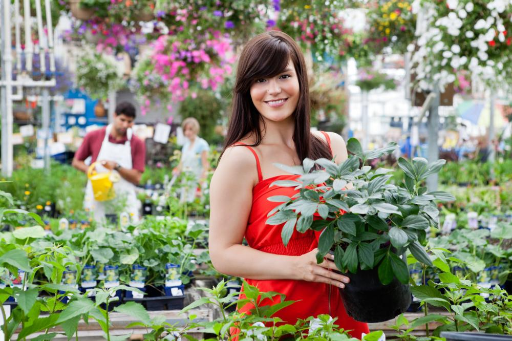 beautiful-female-customer-holding-potted-plant