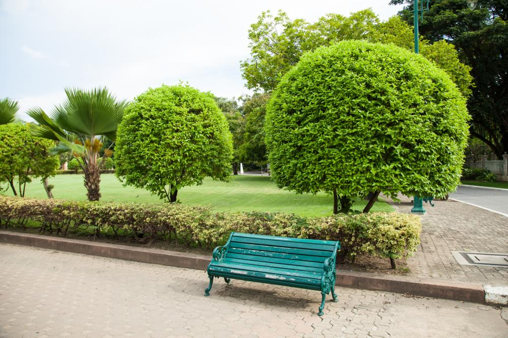 bench-in-the-park