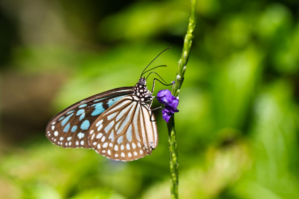 butterfly-on-blue-flower
