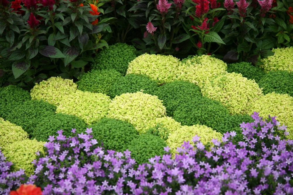 flowers-in-garden (1)