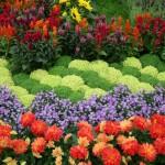 flowers-in-garden