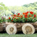 flowers-in-pots-in-wooden-box-on-background-of-garden (2)