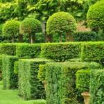 france-picturesque-jardins-du-manoir-d-eyrignac-in-dordogne (1)