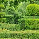 france-picturesque-jardins-du-manoir-d-eyrignac-in-dordogne (6)