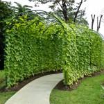 garden-park-scene (1)