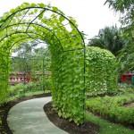 garden-park-scene