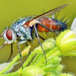 macro-fly-portrait