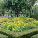 marigold-flowers
