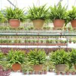 nursery-farm