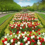 tulips-flowers-in-a-botanical-garden