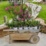 wheelbarrow-full-of-colorful-flowers
